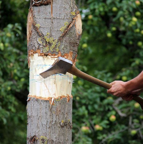 Cropped image of person cutting tree trunk with axe