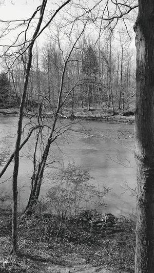 WPT Black & White Black And White River Water Outdoors Pennsylvania Trail Rail Trail Biking Spring Beautiful View Landscape View WPT Tree TreePorn