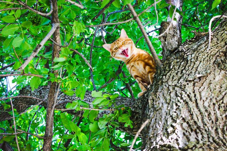 Low Angle Portrait Of Cat Snarling On Branch
