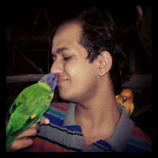@TWEC, Rainbowlorikeet Petlove  Animalslove Pettingzoo wildlife handtamed cute colorful parrot birds
