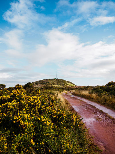 Blue Sky With Clouds Day Gorse Gorse Bush Landscape No People Outdoors Sky The Way Forward Winding Road