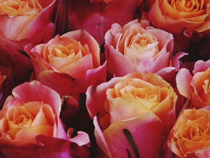 Warm Colours Wonderful Flowers Nature Photography Roses In Bloom Bucket Of The Day Romantic Twist Orange Look Many Flowers Roses Close Up Amsterdam City
