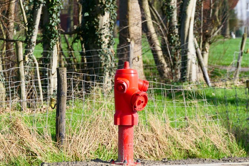 Red Tree Grass Fire Hydrant No People Outdoors Day Close-up Clear Sky Love To Take Photos ❤ 3XSPhotographyUnity 3XSPUnity Eye4photography  Beauty In Nature Panasonic Lumix
