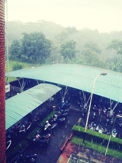 Tropical Rain Parking Area