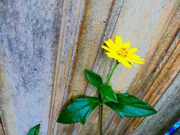 Flower Head Flower Leaf Yellow Petal High Angle View Close-up Plant Green Color