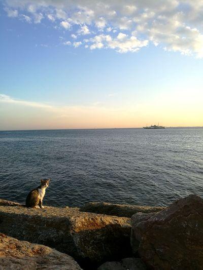 EyeEm Nature Lover EyeEnOnInstagram EyeEm Best Shots EyeEm Selects Cat Water Sea Beach Sunset Wave Sky Horizon Over Water Close-up Landscape Cloud - Sky Calm Seascape Coastline