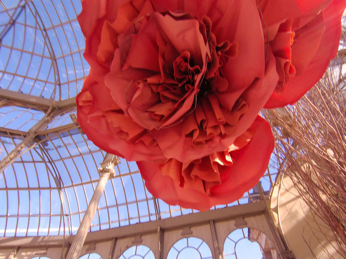 Low angle view of red rose hanging on ceiling