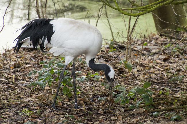 Denmark Ree Park Wintertime Animal Beak Beauty In Nature Bird Crane - Bird Danmark Day Nature No People One Animal Outdoors Plant