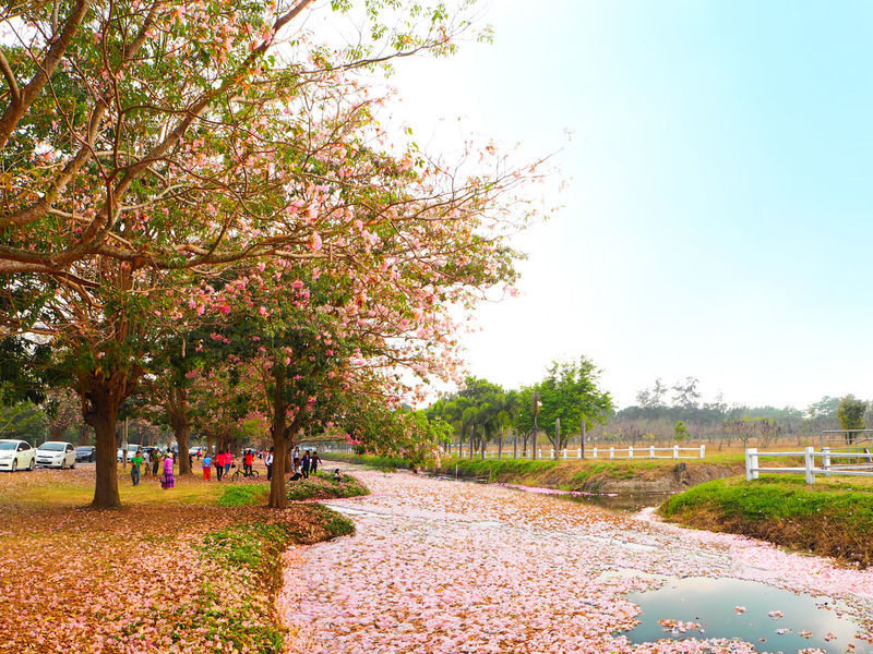 💗🌸💗 Autumn Beauty In Nature My Favorite Photo Exceptional Photographs Fallen Street Photography The Street Photographer - 2016 EyeEm Awards Idyllic The Great Outdoors - 2016 EyeEm Awards Nature Outdoors Park People Watching Pink Color Scenics Season  Colour Of Life Tadaa Community Tranquil Scene Tranquility Travel The Great Outdoors With Adobe Treelined Walkway Landscapes Millennial Pink