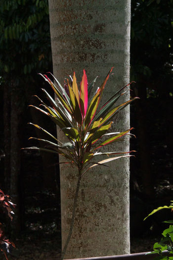 Alturas de Banao: I loved the contrast Alturas De Banao Beauty In Nature Beauty In Nature Close-up Cuba Cuba Collection Day Flower Fragility Freshness Growth National Park Nature Nature No People Outdoors Plant Tree