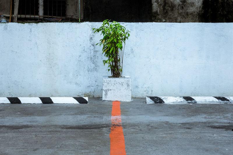 Plant on road