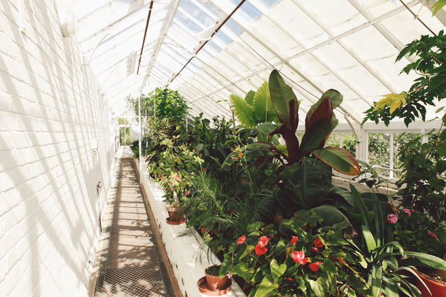 Arundel Beauty In Nature Day Diminishing Perspective Flower Garden Green Green Color Greenhouse Greenhouse Plants Growing Growth Leaf Nature No People Plant Summer The Way Forward Vanishing Point Walkway