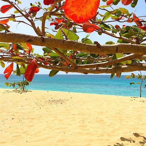 Bw_beautiful_landscapes Beach Grenada Shutterbug_collective Stunning_shot Splendid_beaches Hdr_beautiful_landscapes Hdr_pics Andyjohnsonphotography Amazingphotohunter Amazingpics Starwinners Ilivewhereyouvacation Ig_global_life Islandlife Ig_caribbean Ig_serenity Westindies_landscape Wonderful_places Exploringtheglobe EarthCaptures Theworld_thru_youreyes Theblueislands