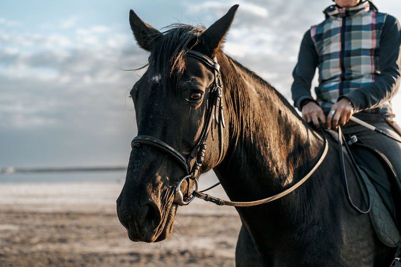Close-up of horse riding