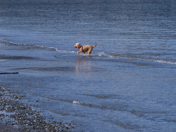 This dog is exiting from the ocean after a swim Beach Dog Dog Swimming No People Ocean Swim Water Wet
