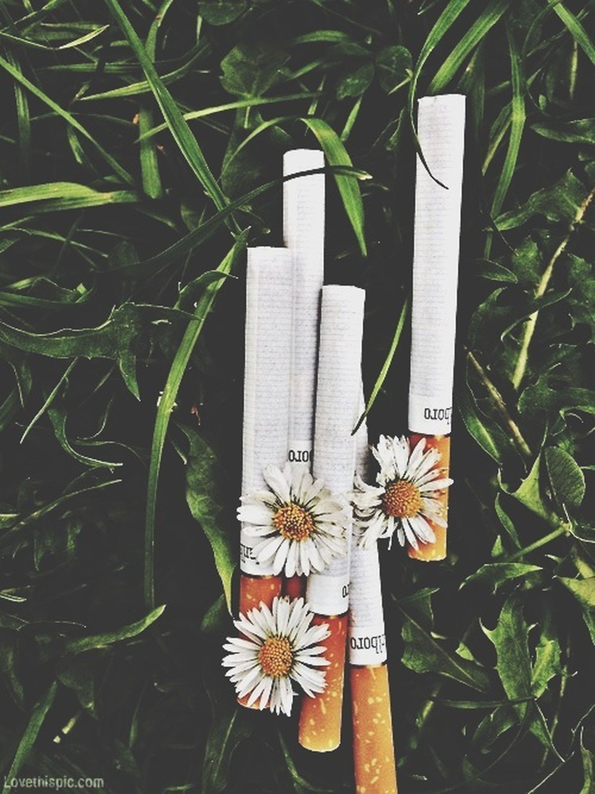 flower, plant, close-up, growth, white color, leaf, high angle view, green color, no people, day, art, outdoors, art and craft, creativity, petal, nature, human representation, focus on foreground, grass, fragility