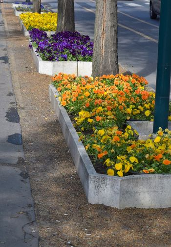 Beauty In Nature Broadwalk Day Flower Flowerbeds Fragility Freshness Growth Nature No People Outdoors Plant Road Road Decoration Yellow