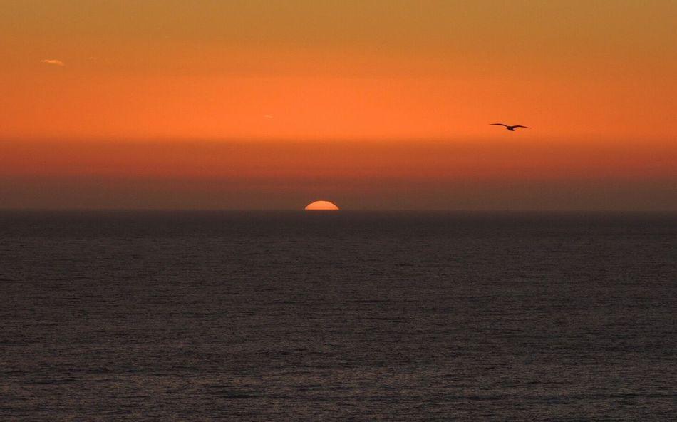 Sunset Is The Perfect Timing To... Sundown...♥ I Love Sunset Sundownlovers Beautiful Sunset Peaceful Enjoying Life The Best Moment Of The Day Enjoying The Sunset Sunset And Sea Bird In Flight Orange Sky Sunset Relaxing Reñaca Beach , Chile