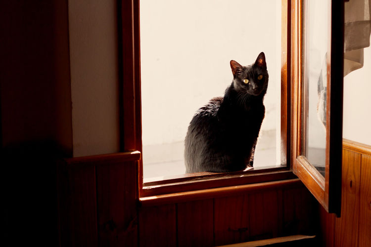 Cat Sitting On Window Sill At Home