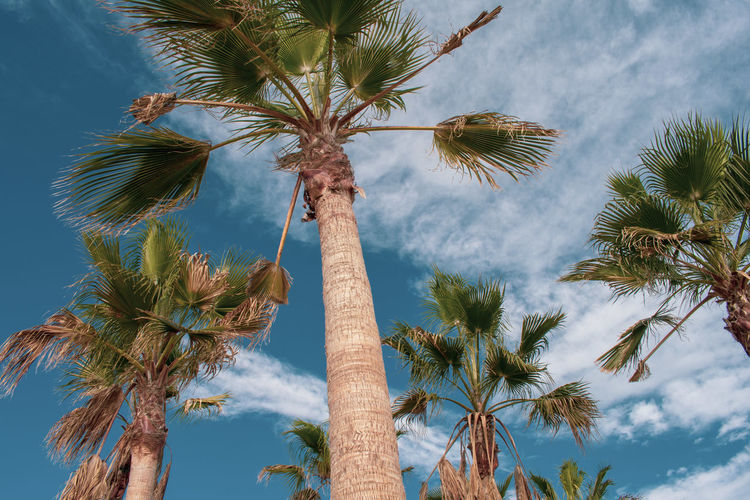 Palmtrees Winter Beach Capture Tomorrow Nature Clouds And Sky Clouds Trees EyEmNewHere Tree Tree Area Palm Tree Forest Tree Trunk Mountain Adventure Blue Pine Tree Pinaceae Coconut Palm Tree Palm Leaf Frond Leaves Date Palm Tree Date Pine Woodland Tropical Tree Growing Treetop Branch Sky Only