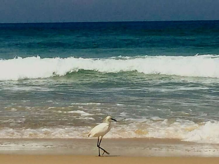 Sea Bird Beach Wave Water Animals In The Wild Animal Wildlife Nature Beauty In Nature One Animal Animal Themes Horizon Over Water Outdoors Sand No People Perching Day