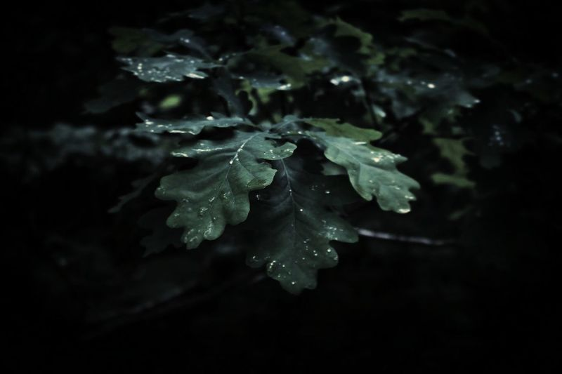 Cold Temperature Beauty In Nature No People Nature Frozen Crystal Fragility Water Black Background Outdoors First Eyeem Photo EyeEmNewHere Swedish Summer Scenics Swedish Nature Green Color