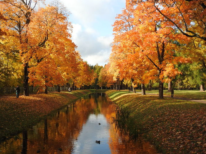 Scenic view of lake by park during autumn
