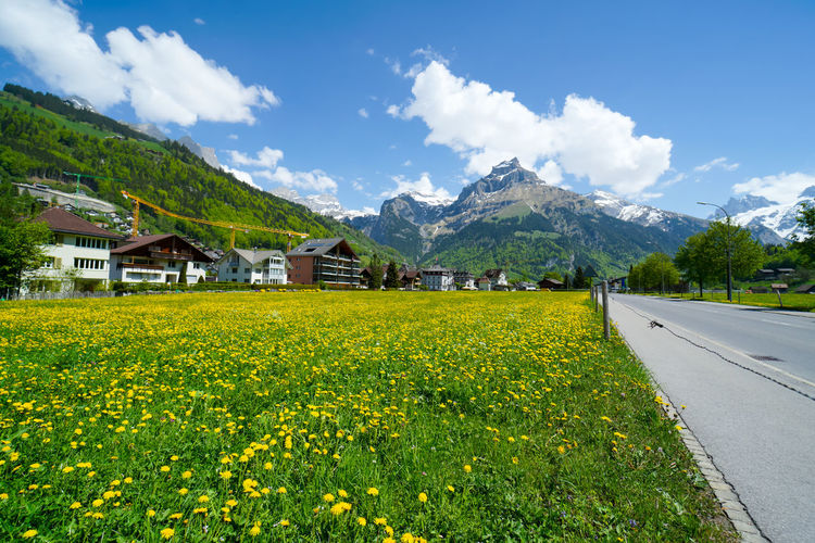 beautiful engelberg town and village Field Flowers Mount Titlis Switzerland🇨🇭 Vacations Alps Architecture Beauty In Nature Building Building Exterior Built Structure Cloud - Sky Day Engelberg Environment Field Flower House Land Landscape Lavender Mountain Mountain Range Nature No People Outdoors Plant Rejuvenation River Road Rotary Scenics Scenics - Nature Sky Snow Sunny Day Transportation Travel Destinations Truebsee