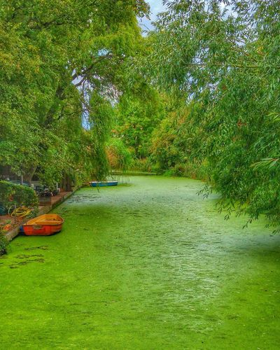Beautiful contrast of green canals.. Netherlands. First Eyeem Photo Nature Photography Green Green Green!  Canals And Waterways TakeoverContrast Beauty In Nature
