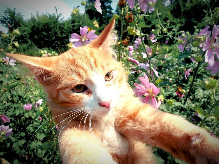 Гуляем с Рыжиком в саду Eyem Cat Lover Red Cat Red Cat Relaxing Redcat Cat Cats 🐱 Katzen Cat Portrait Cats Eyemcat