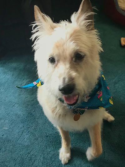 One Animal Pets Dog Canine Animal Themes Domestic Animal