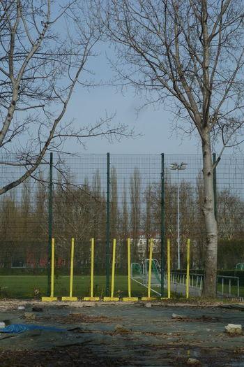 Berlin Prenzlauer Berg Berliner Ansichten Nature No People Outdoors Sportplatz Tree Yellow