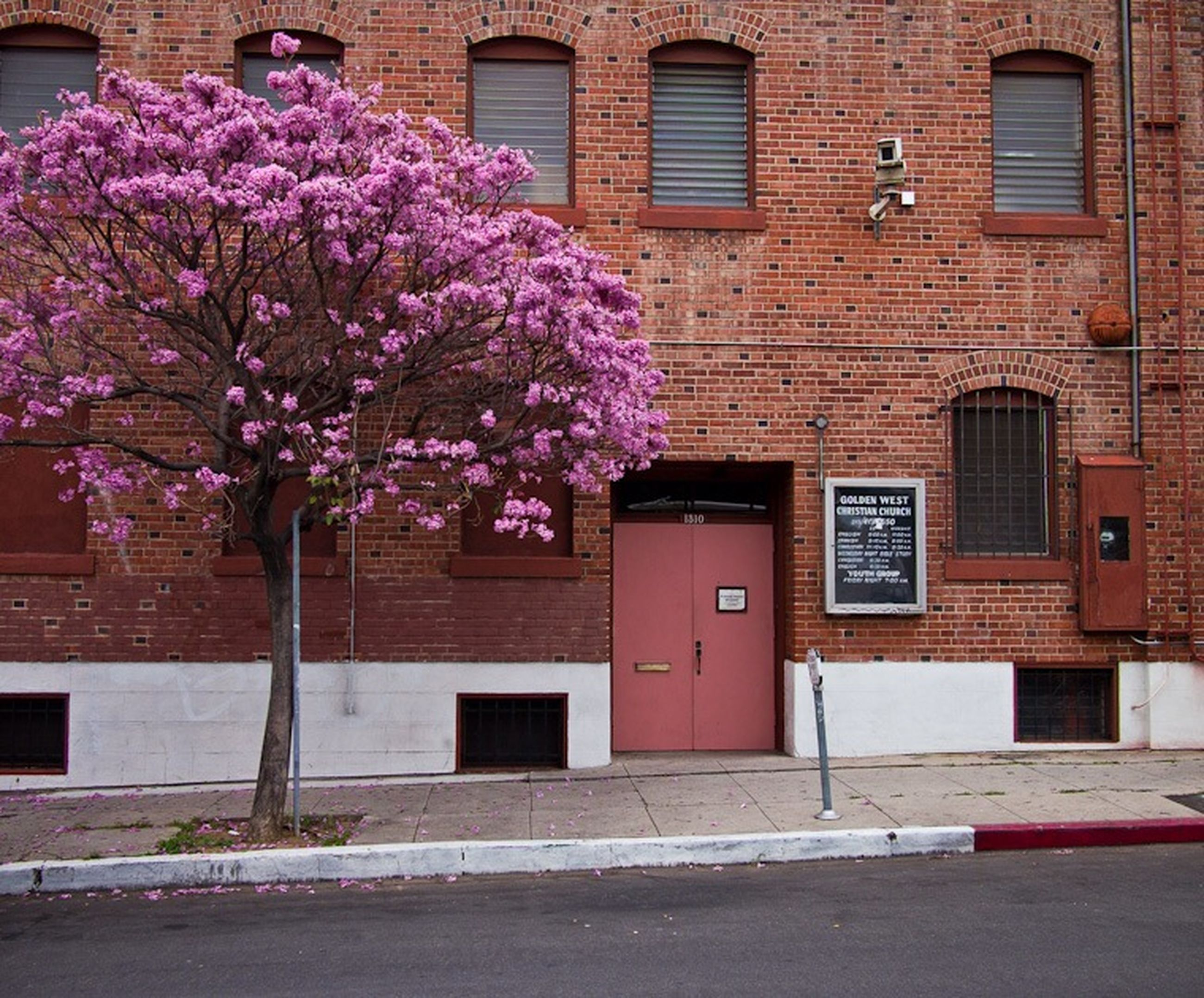 building exterior, architecture, flower, built structure, window, pink color, house, residential structure, growth, residential building, freshness, fragility, city, building, outdoors, day, door, no people, pink, plant