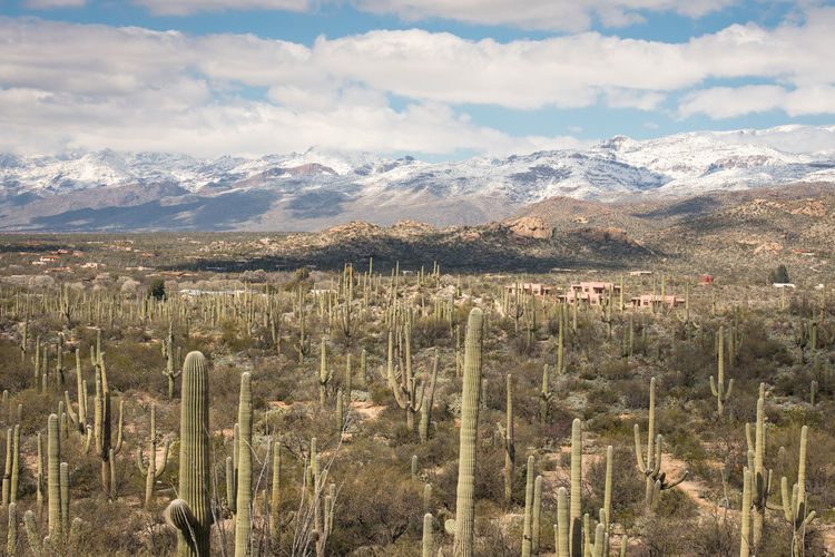 Cloud - Sky Sky Beauty In Nature Mountain Landscape Scenics - Nature Plant Environment Tranquil Scene Land Field Nature Tranquility No People Growth Day Mountain Range Non-urban Scene Outdoors Rural Scene Arid Climate Saguaro Cactus