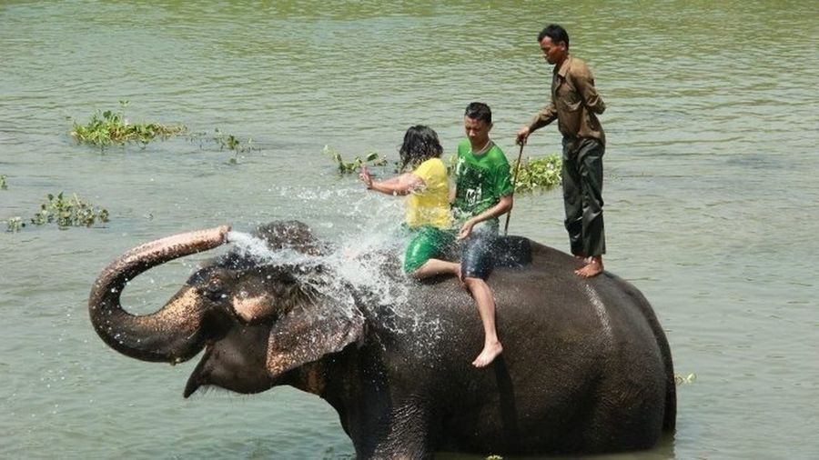 Playing With Elephant