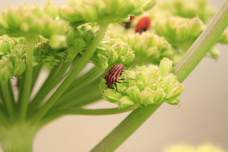 Bug Animal Animal Themes Animal Wildlife Animals In The Wild Beauty In Nature Bugs Close-up Flower Flowering Plant Focus On Foreground Fragility Green Color Growth Insect Invertebrate Nature No People One Animal Outdoors Plant Selective Focus Vulnerability