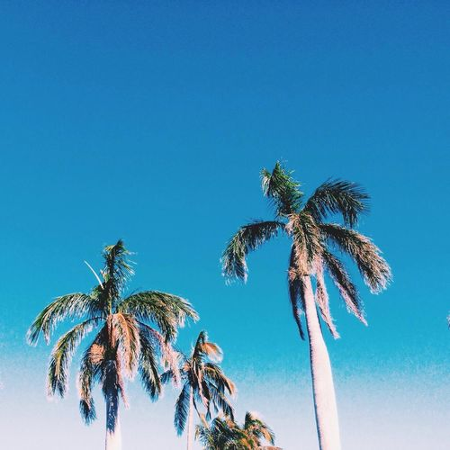 Iphonephotography Palm Tree Blue Clear Sky Scenics Nature Coconut Palm Tree Beauty In Nature