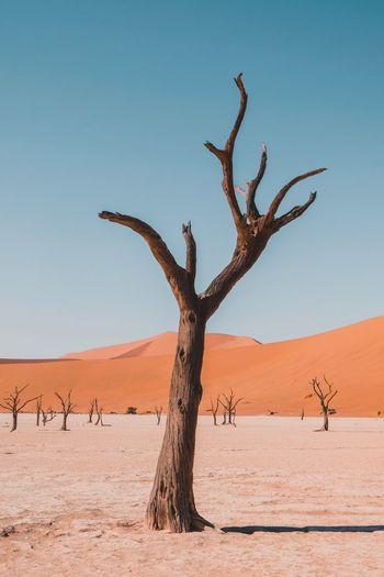 Dead tree on desert against clear sky