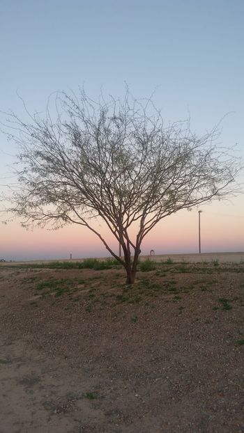 Tree standing in the sunset Nature Sunset Tree Outdoors No People Sky Tranquility Grass Beauty In Nature Close-up Water Day