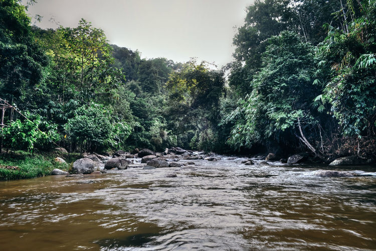 Scenic view of river flowing amidst trees in forest