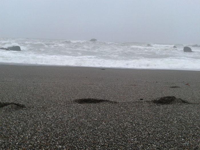 Beach Bodega Bay Coastline Highway 1 Horizon Over Water Ocean Outdoors Pacific Ocean Sand Scotty Creek Beach Sea Shore Sonoma County Sonoma County Coast Storm Storm Surge Waves Waves Crashing