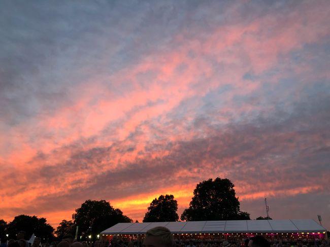 #FestivalinaDay #MobileSky #sunset #sky #clouds Cloud - Sky Sky Sunset Tree Orange Color Beauty In Nature Nature