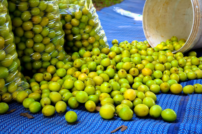 Close-up Day Food Food And Drink For Sale Freshness Fruit Granny Smith Apple Green Color Healthy Eating Market Market Stall Monkey Apple No People Outdoors Retail  ลูกพุทรา