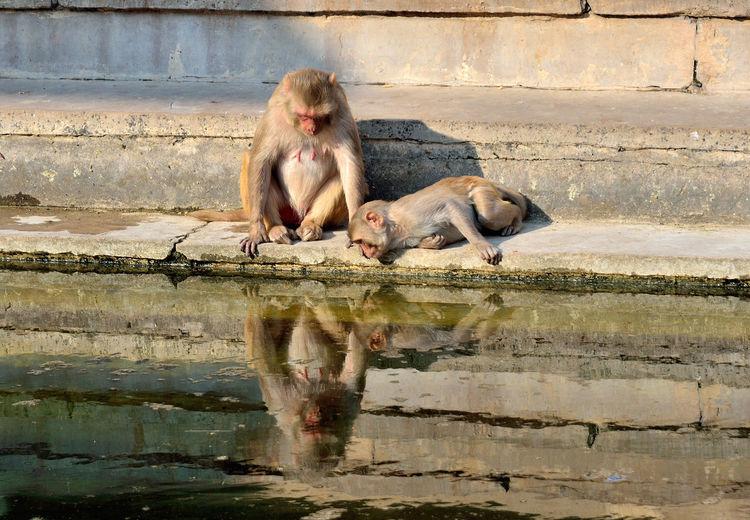 Monkeys sitting on steps by lake