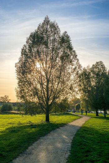 Heidenfahrt Bare Tree Beauty In Nature Cloud - Sky Day Grass Green Color Growth Landscape Nature No People Outdoors Scenics Sky Sunlight Tranquil Scene Tranquility Tree