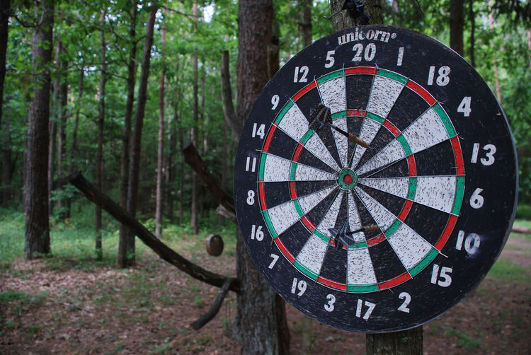 Close-up of dartboard on tree trunk in forest