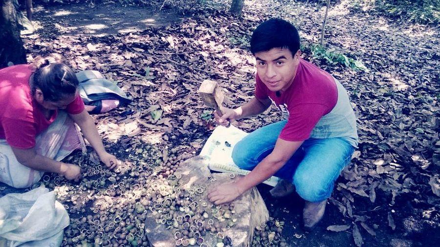 La producción de macadamia :)). :D