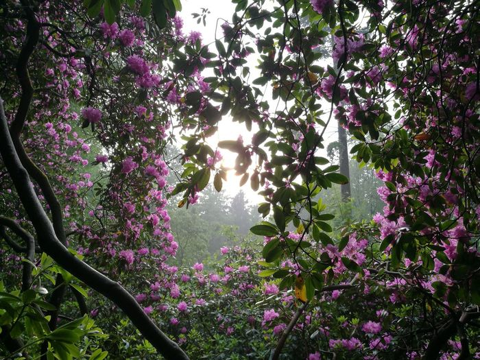 Summerflowers Pure Nature, Amazing Love It