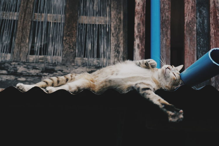 Relaxing Cat Cute Cats Relaxing Moments Relaxing Time Cute Pets Cat Of EyeEm EyeEm Gallery Thailand The Great Outdoors - 2016 EyeEm Awards
