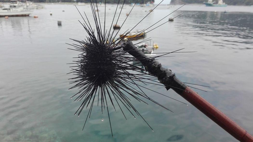 Sea Diadema Seaurchin Heda Japan